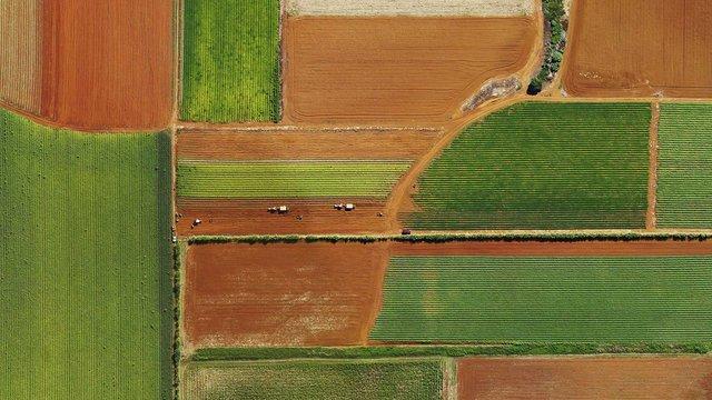 Fields in Tweed Heads