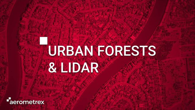 Urban Forests & LiDAR